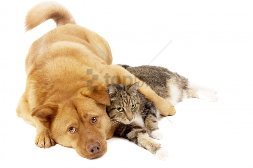 free PNG cat, friends, red, the dog wallpaper background best stock photos PNG images transparent