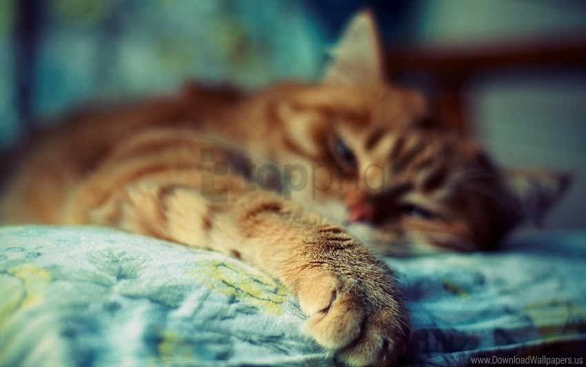 free PNG cat, fur, paw, sleep, striped wallpaper background best stock photos PNG images transparent
