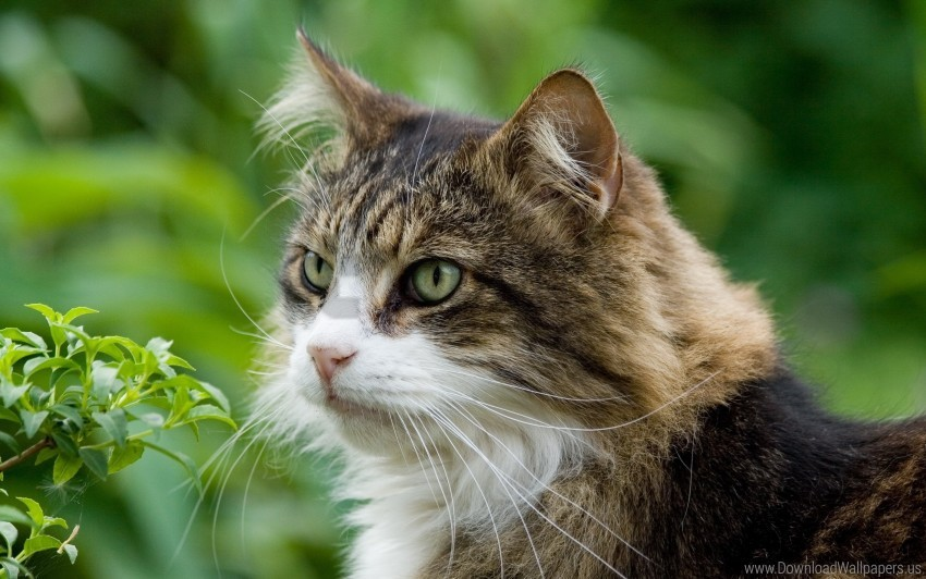 free PNG cat, furry, grass, muzzle, spotted wallpaper background best stock photos PNG images transparent