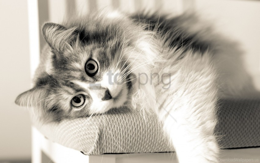 free PNG cat, furry, lying, rest wallpaper background best stock photos PNG images transparent
