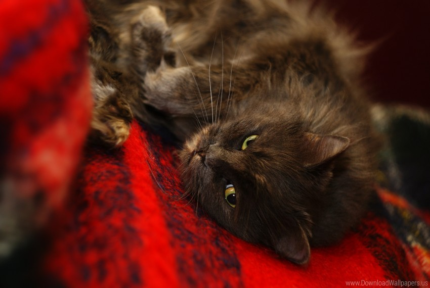 free PNG cat, fuzzy, muzzle, sleep wallpaper background best stock photos PNG images transparent