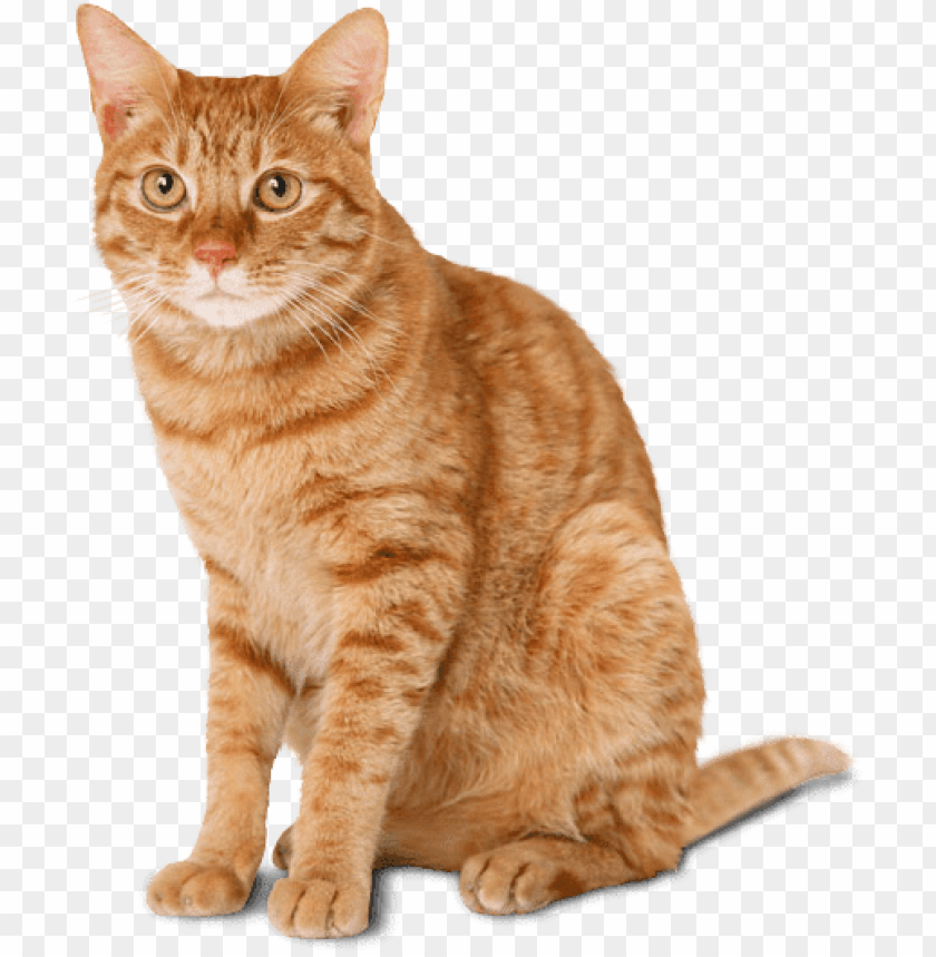 Download cat ginger png images background@toppng.com