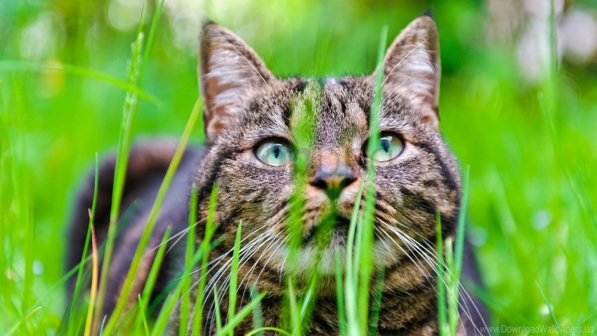 free PNG cat, grass, hide, muzzle wallpaper background best stock photos PNG images transparent