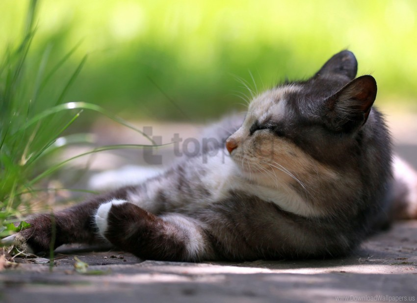 free PNG cat, grass, holiday wallpaper background best stock photos PNG images transparent
