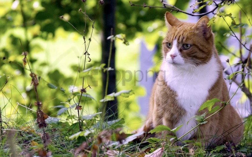 free PNG cat, grass, hunting, spotted wallpaper background best stock photos PNG images transparent