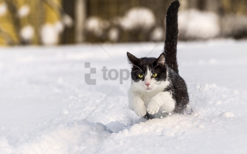 free PNG cat, grass, jump, walk wallpaper background best stock photos PNG images transparent