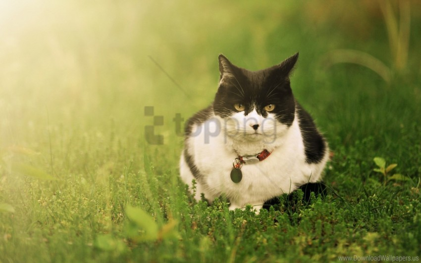 free PNG cat, grass, lie, spotted wallpaper background best stock photos PNG images transparent
