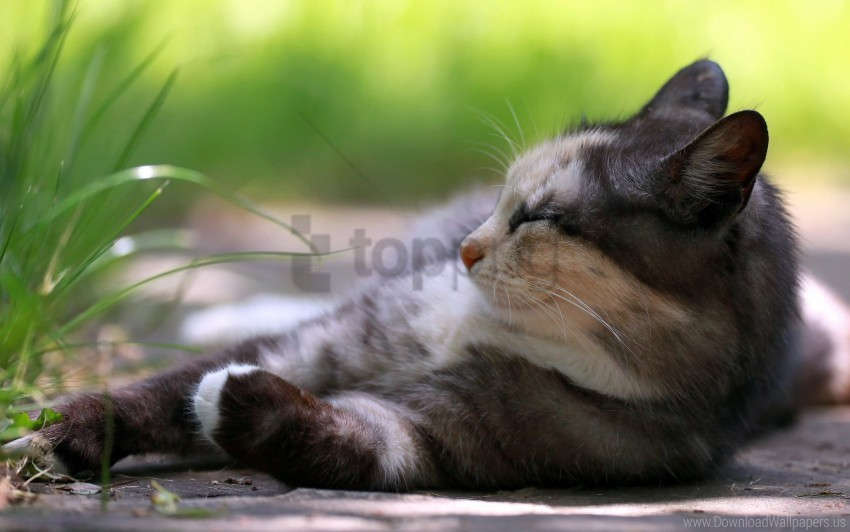 free PNG cat, grass, lying, rest, sleep wallpaper background best stock photos PNG images transparent