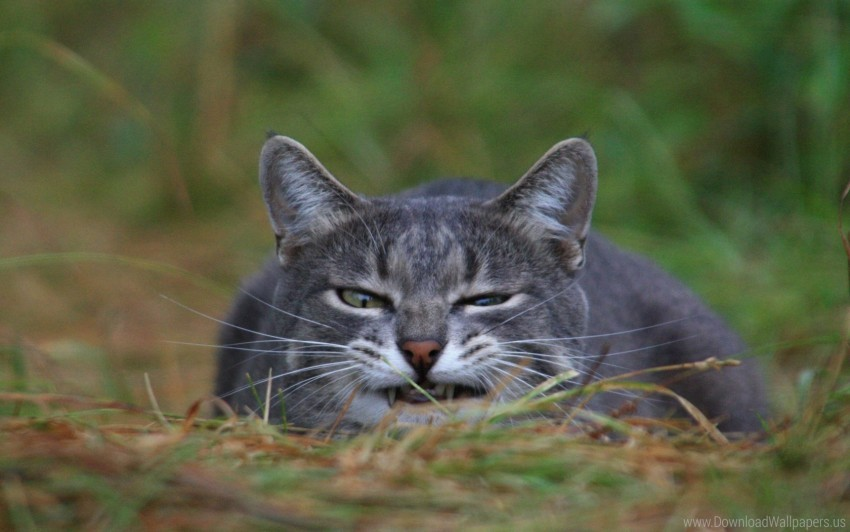 free PNG cat, grass, muzzle wallpaper background best stock photos PNG images transparent