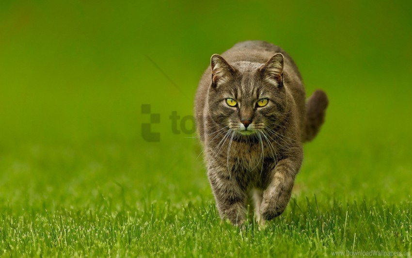 free PNG cat, green, lawn, nature, spring wallpaper background best stock photos PNG images transparent