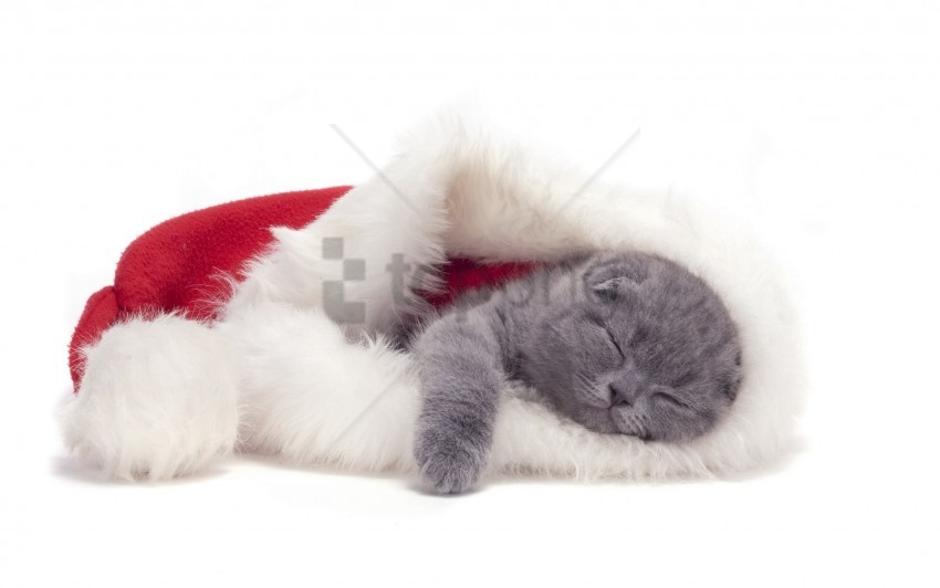 free PNG cat, hat, lie down, sleep wallpaper background best stock photos PNG images transparent