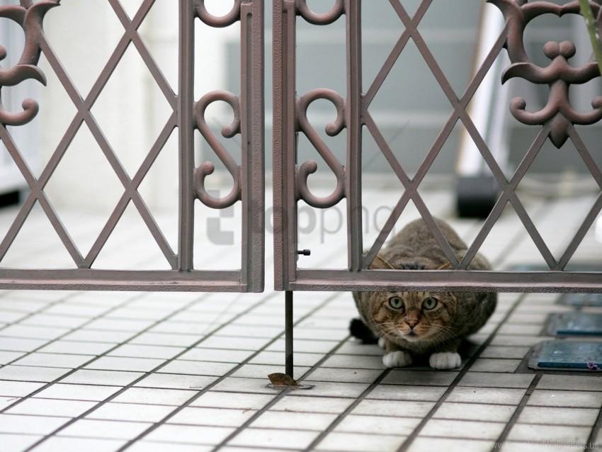 free PNG cat, hide, peep, sit wallpaper background best stock photos PNG images transparent