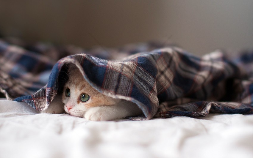 free PNG cat, kitten, lying, playful wallpaper background best stock photos PNG images transparent