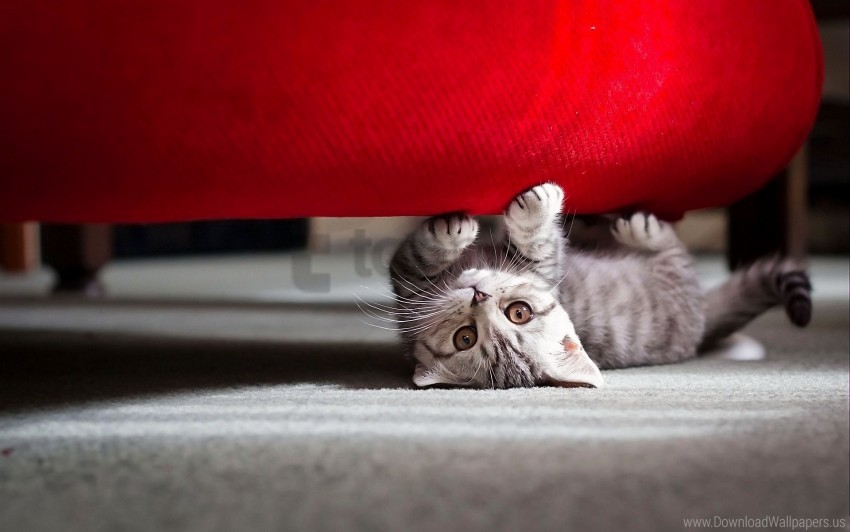 free PNG cat, lie down, muzzle, playful, striped wallpaper background best stock photos PNG images transparent