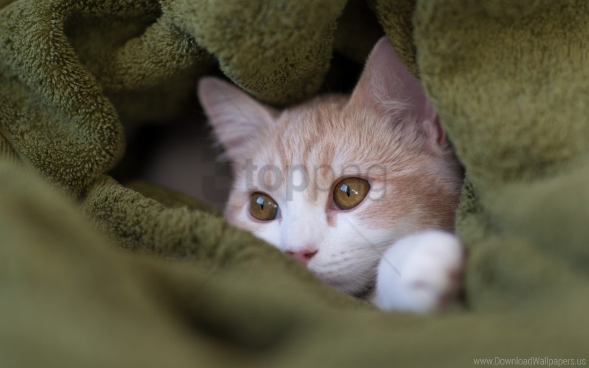 free PNG cat, look, look out, muzzle, towels wallpaper background best stock photos PNG images transparent
