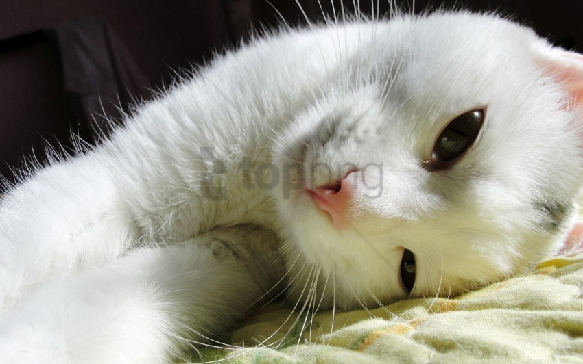 free PNG cat, look, lying wallpaper background best stock photos PNG images transparent