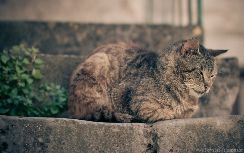 free PNG cat, lying, rest wallpaper background best stock photos PNG images transparent