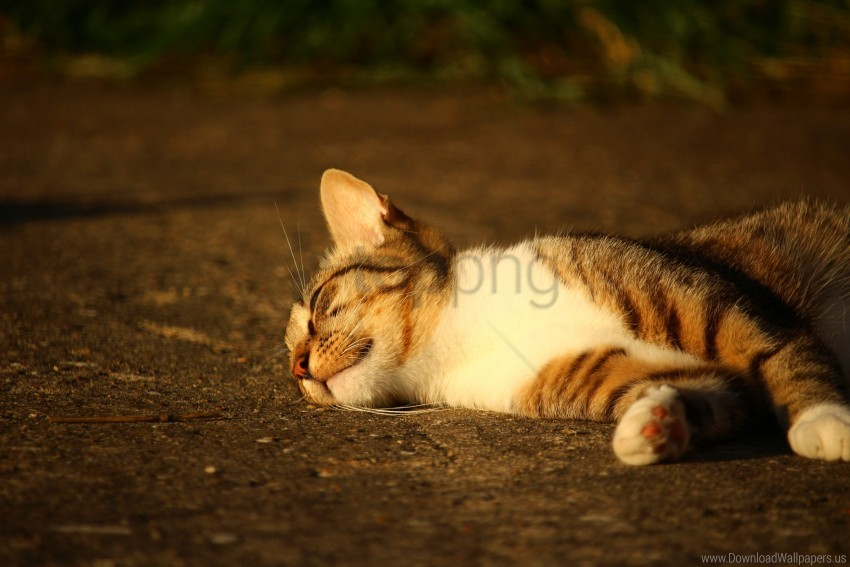free PNG cat, lying, striped, sunlight wallpaper background best stock photos PNG images transparent