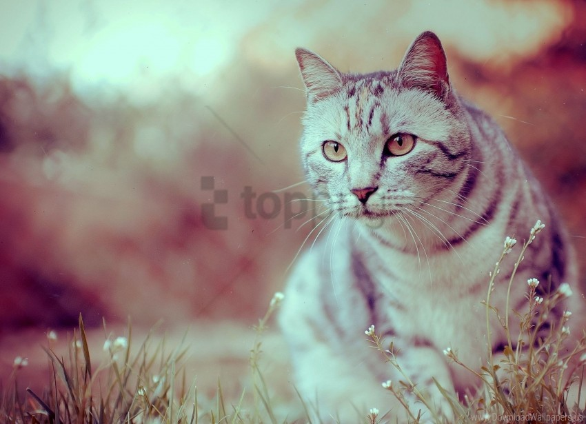 free PNG cat, sit, striped wallpaper background best stock photos PNG images transparent