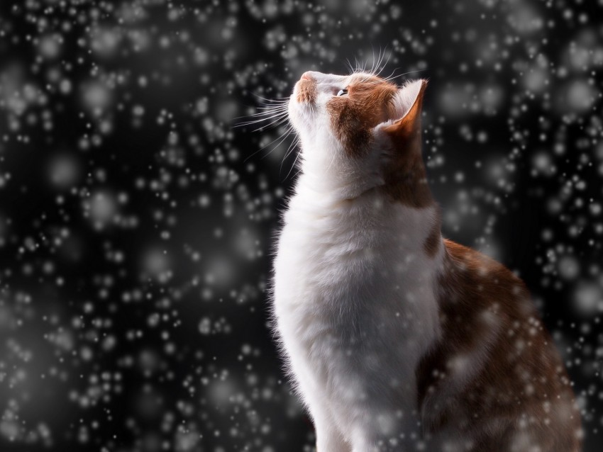 free PNG cat, snow, glare, bokeh, snowfall, photoshop background PNG images transparent