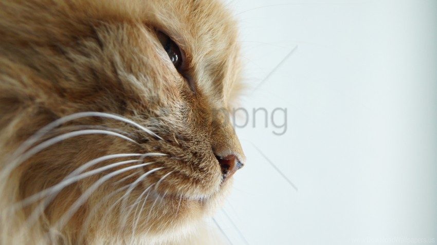 free PNG cat, squint, the pro wallpaper background best stock photos PNG images transparent