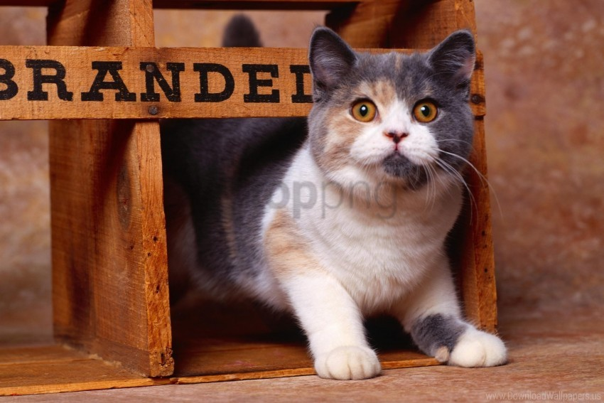 free PNG cat, striped, thick wallpaper background best stock photos PNG images transparent