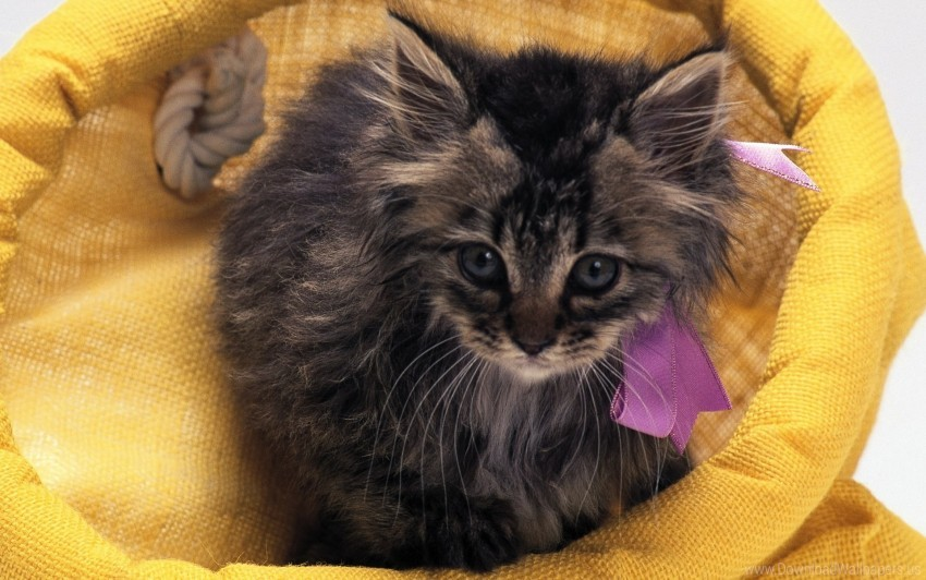 free PNG cat with a bow, fluffy, yellow bag wallpaper background best stock photos PNG images transparent