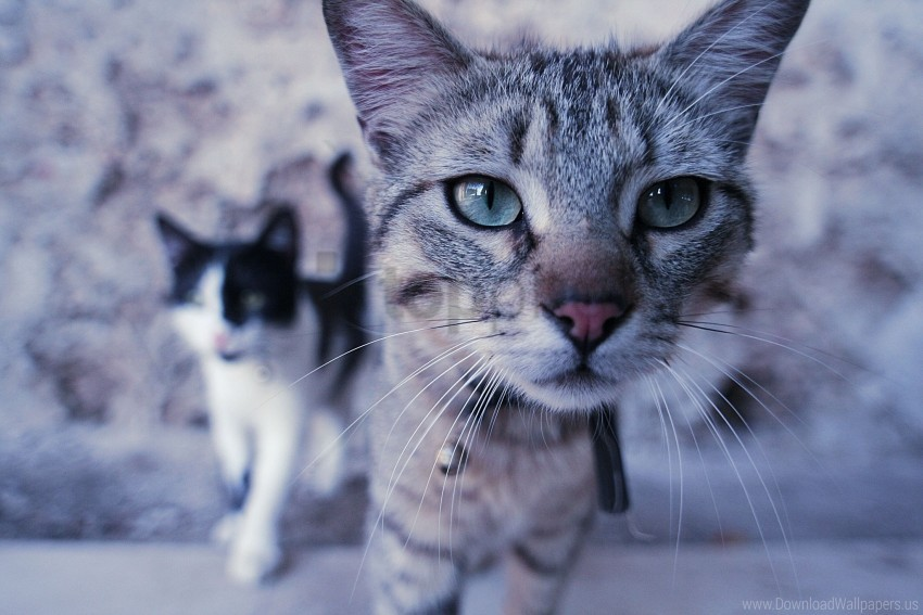 free PNG cats, couple, curiosity, face wallpaper background best stock photos PNG images transparent