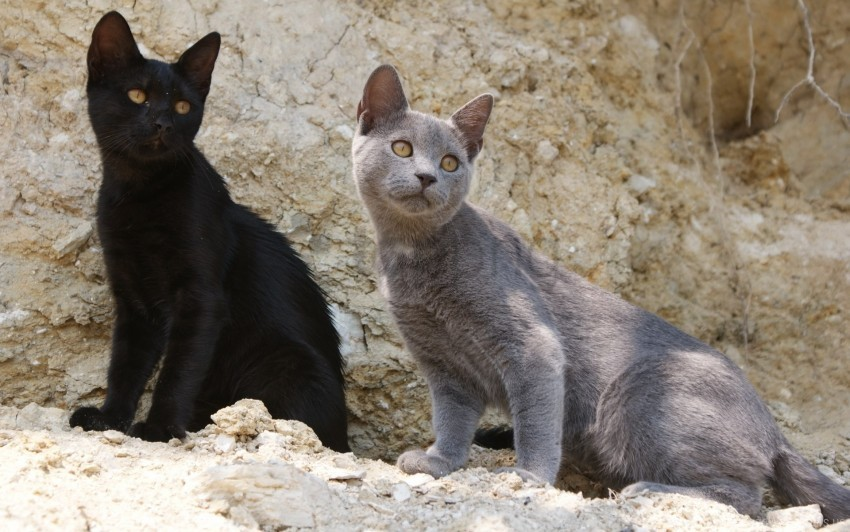 Cats Kittens Rock Sand Wallpaper Background Best Stock Photos Toppng