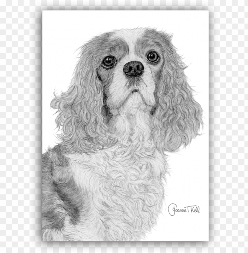 free PNG cavalier king charles spaniel blank greeting card - cavalier king charles spaniel PNG image with transparent background PNG images transparent