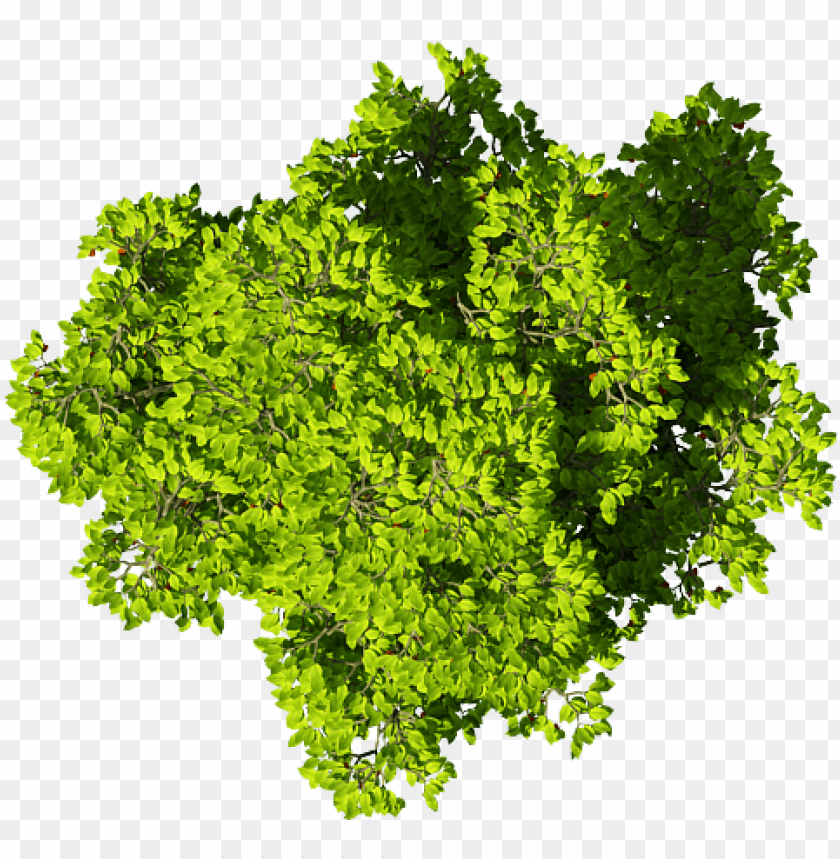 free PNG cây photoshop tree photoshop, photoshop texture, photoshop - vegetable PNG image with transparent background PNG images transparent