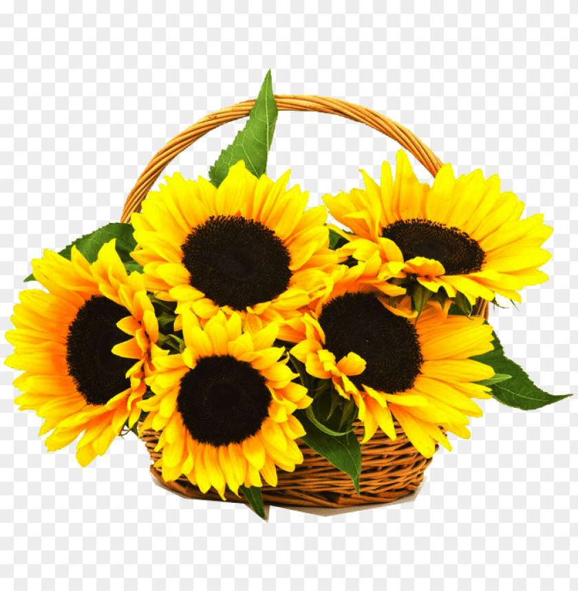 free PNG cell traditional basket online - sunflower basket PNG image with transparent background PNG images transparent