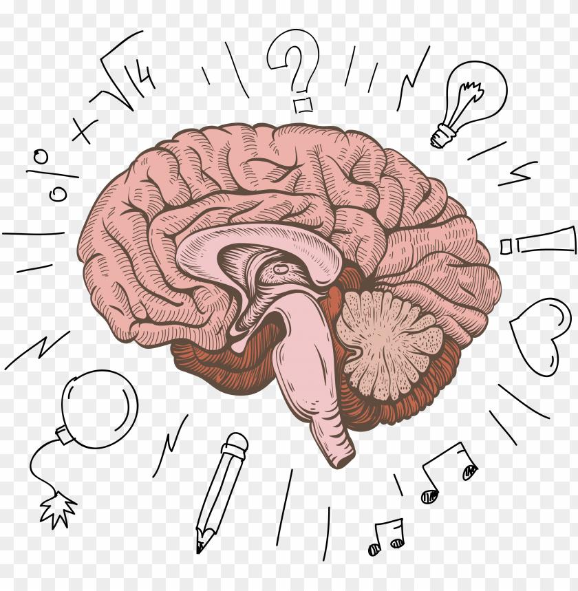 free PNG cerebrum human structure design - cartoon human brain PNG image with transparent background PNG images transparent