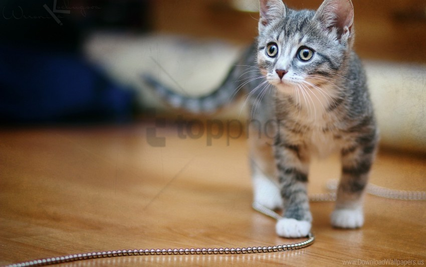 free PNG chain, kitten, spotted wallpaper background best stock photos PNG images transparent