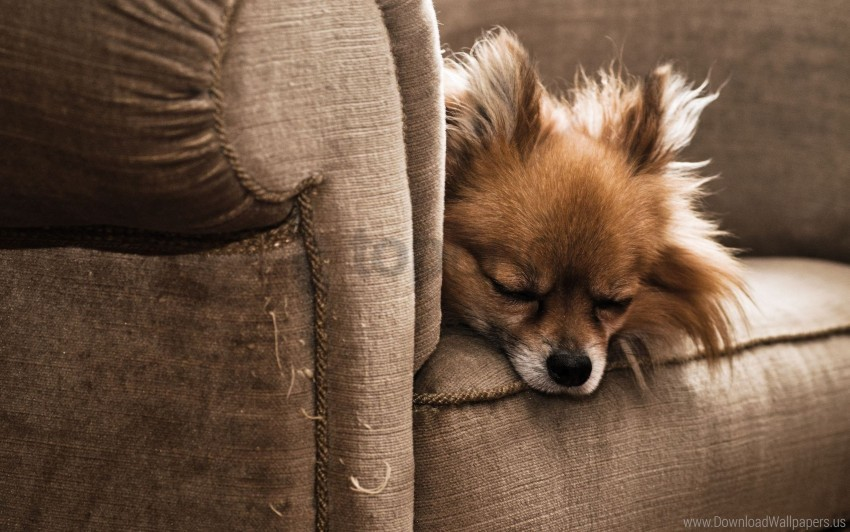 free PNG chair, dog, furry, puppy, sleeping wallpaper background best stock photos PNG images transparent