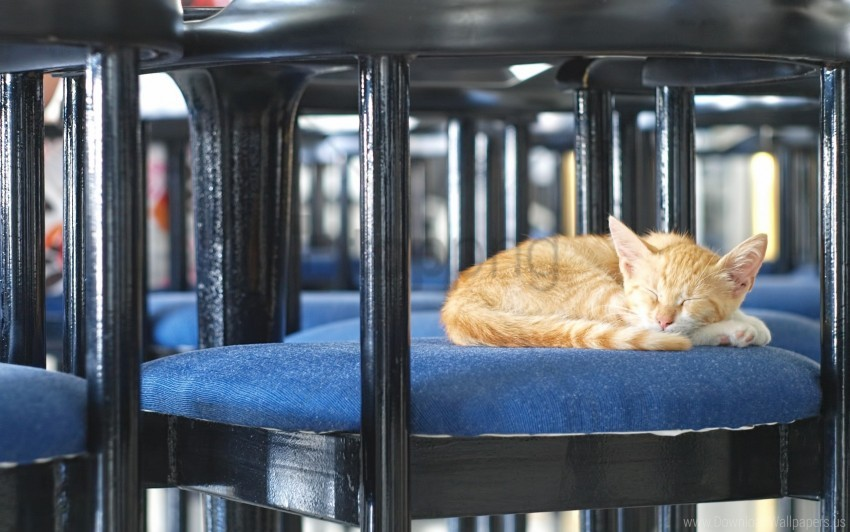 free PNG chair, kitten, lie down wallpaper background best stock photos PNG images transparent