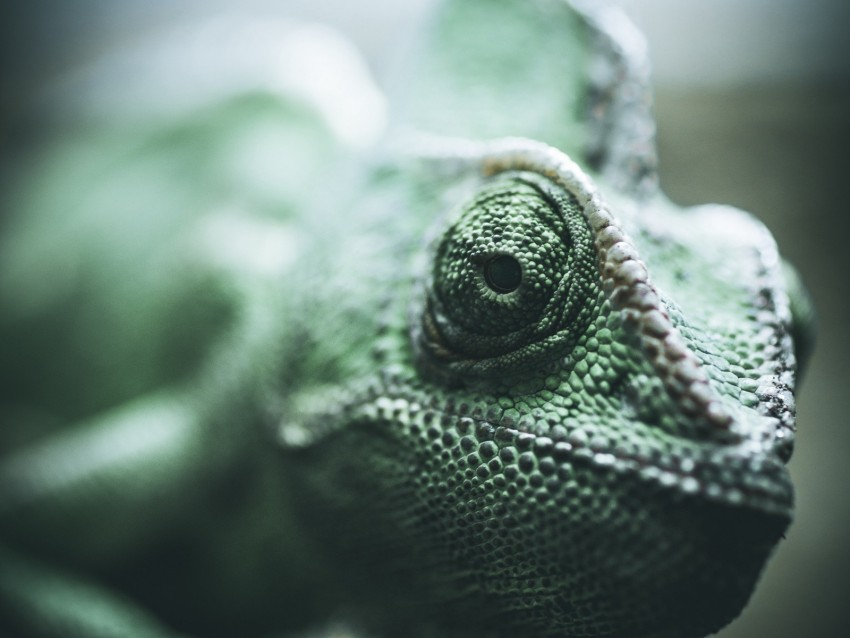 free PNG chameleon, reptile, eyes, scales background PNG images transparent