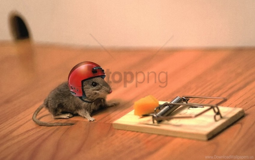 free PNG cheese, funny, helmet, mouse, mouse trap, situation wallpaper background best stock photos PNG images transparent