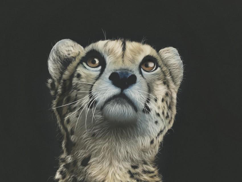 free PNG cheetah, art, drawing, predator, glance background PNG images transparent