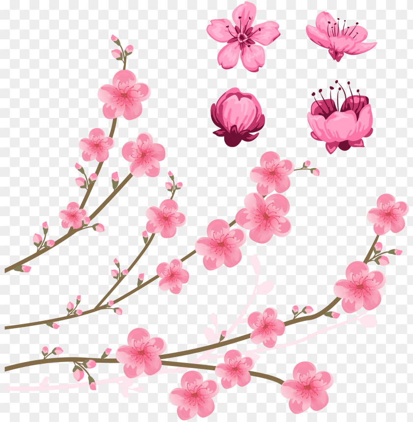 Cherry Blossom Drawing Illustration Clip Art Cherry Blossoms Png Image With Transparent Background Toppng
