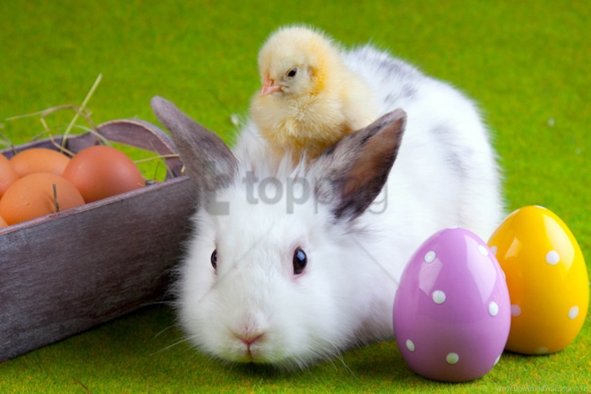 free PNG chicken, easter, eggs, friendship, rabbit wallpaper background best stock photos PNG images transparent