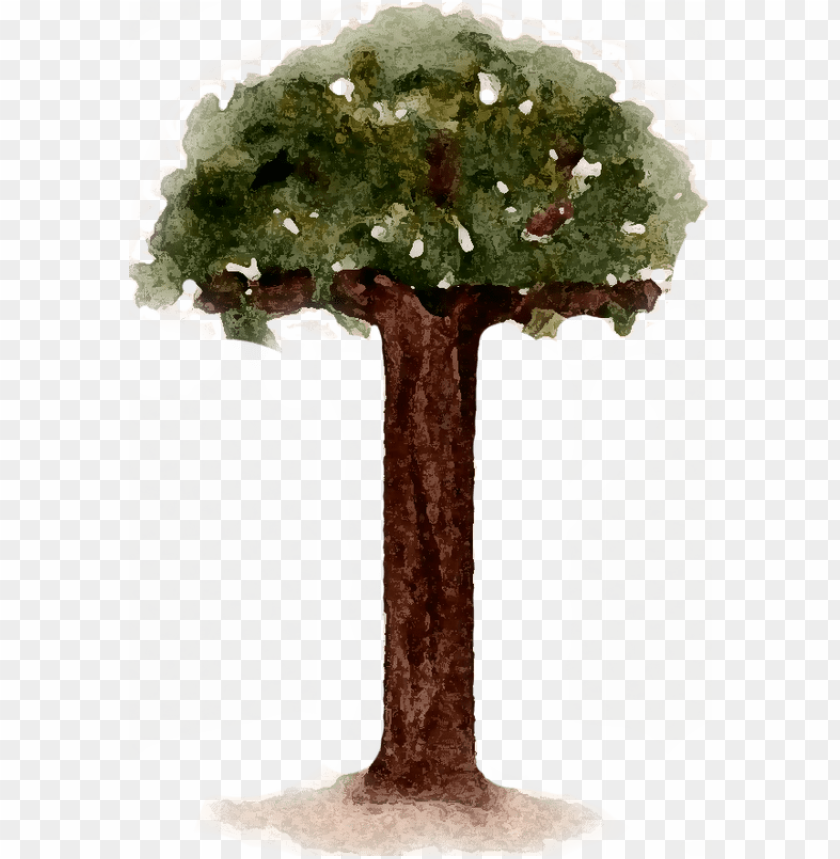 free PNG children's book illustrations - sabal palmetto PNG image with transparent background PNG images transparent