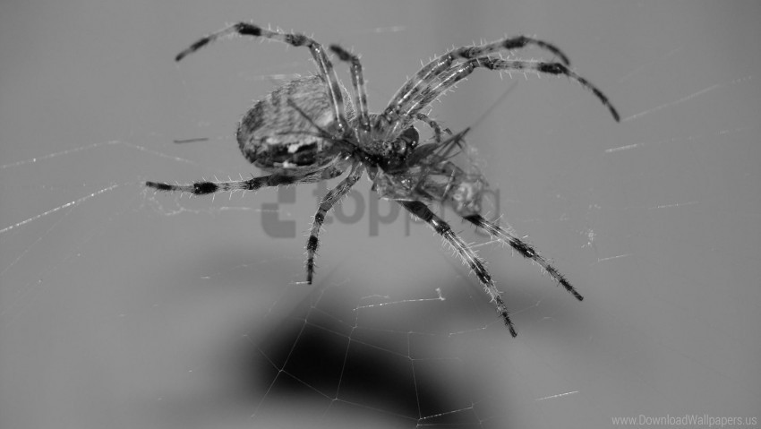 free PNG climb, foot, spider, web wallpaper background best stock photos PNG images transparent