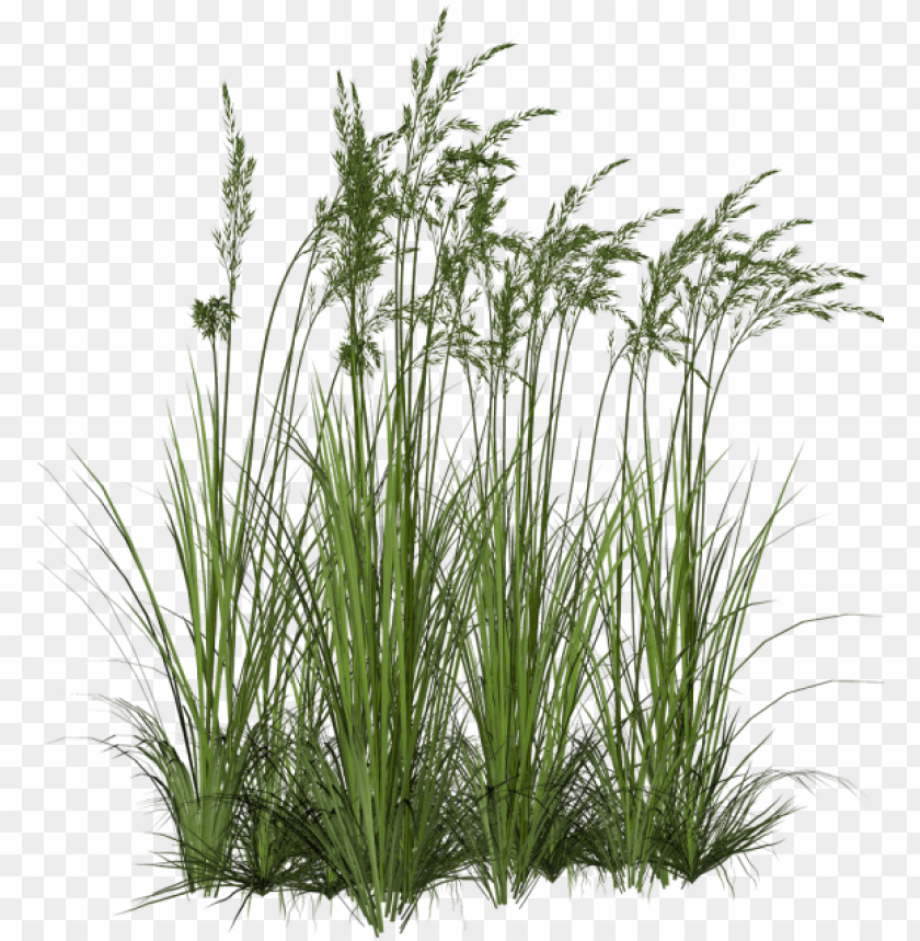 free PNG clip art black and white download plant fountain clip - tall grass PNG image with transparent background PNG images transparent