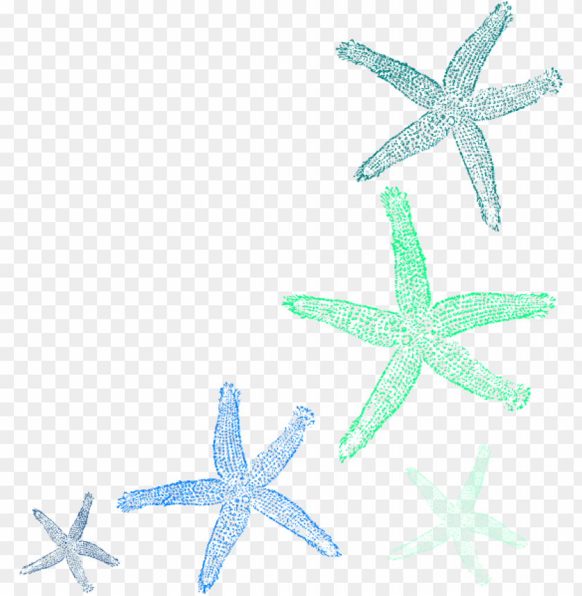 free PNG clip art transparent library starfish clip art seashell - watercolor seashell clipart PNG image with transparent background PNG images transparent