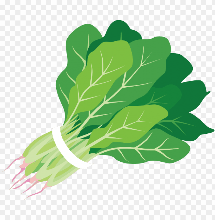 free PNG clip library download clipartxtras png clipartix - clip art spinach PNG image with transparent background PNG images transparent