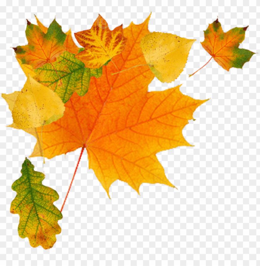 Leaf Clip Art at Clker.com - vector clip art online, royalty free ... | 859x840