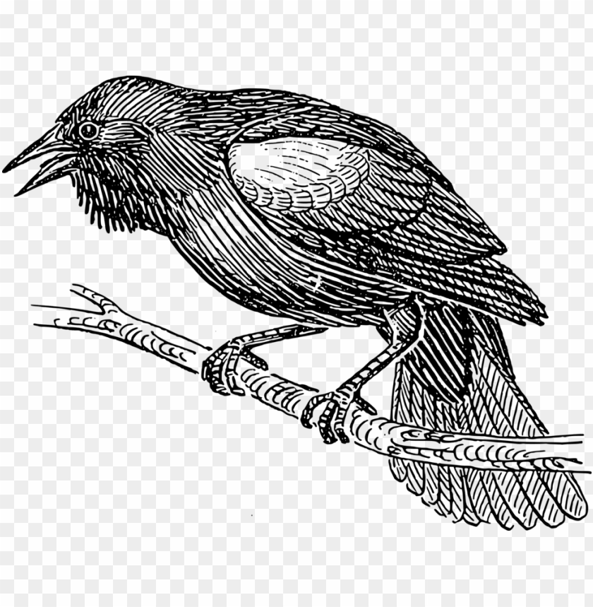 free PNG clipart black bird line drawing pictures www picturesboss - bird black and white drawi PNG image with transparent background PNG images transparent