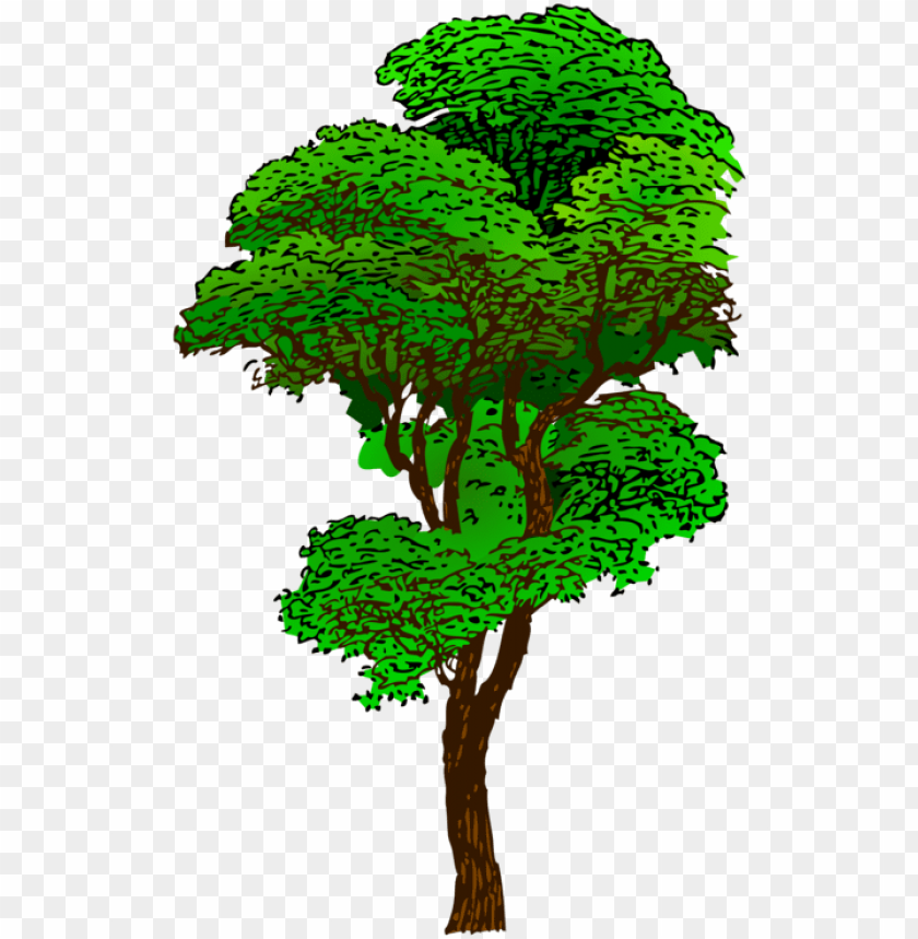 free PNG clipart jungle tree - tall tree clip art PNG image with transparent background PNG images transparent