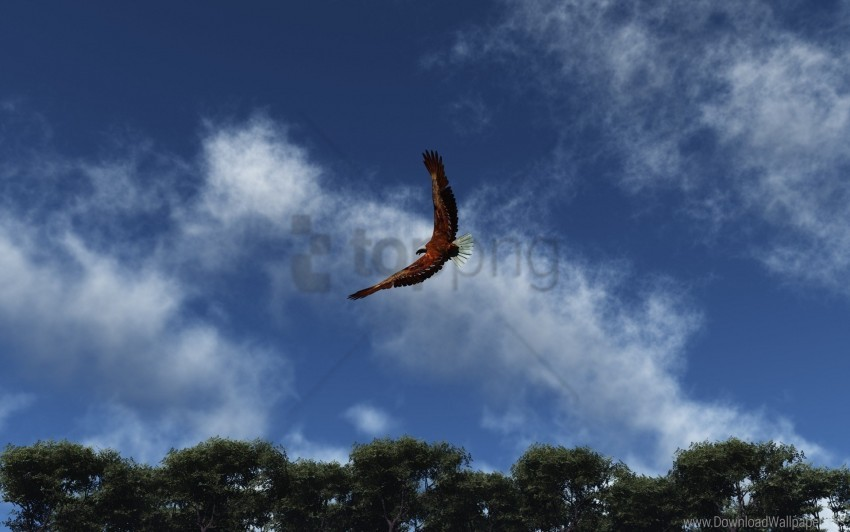 free PNG clouds, eagle, flap, flight, sky, wings wallpaper background best stock photos PNG images transparent